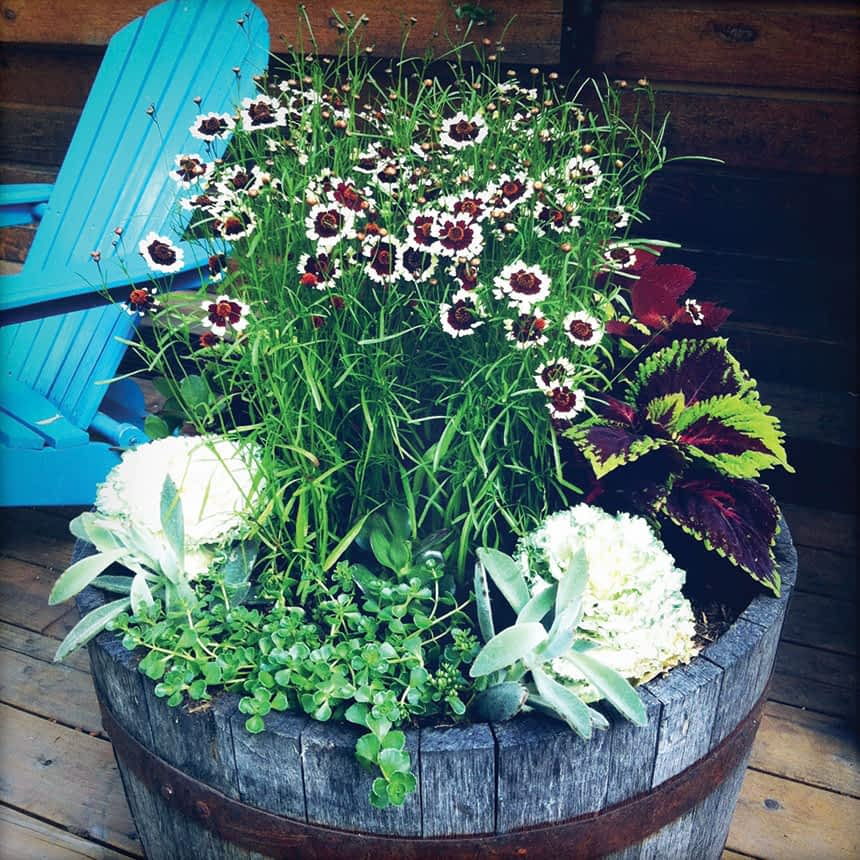 planters_02