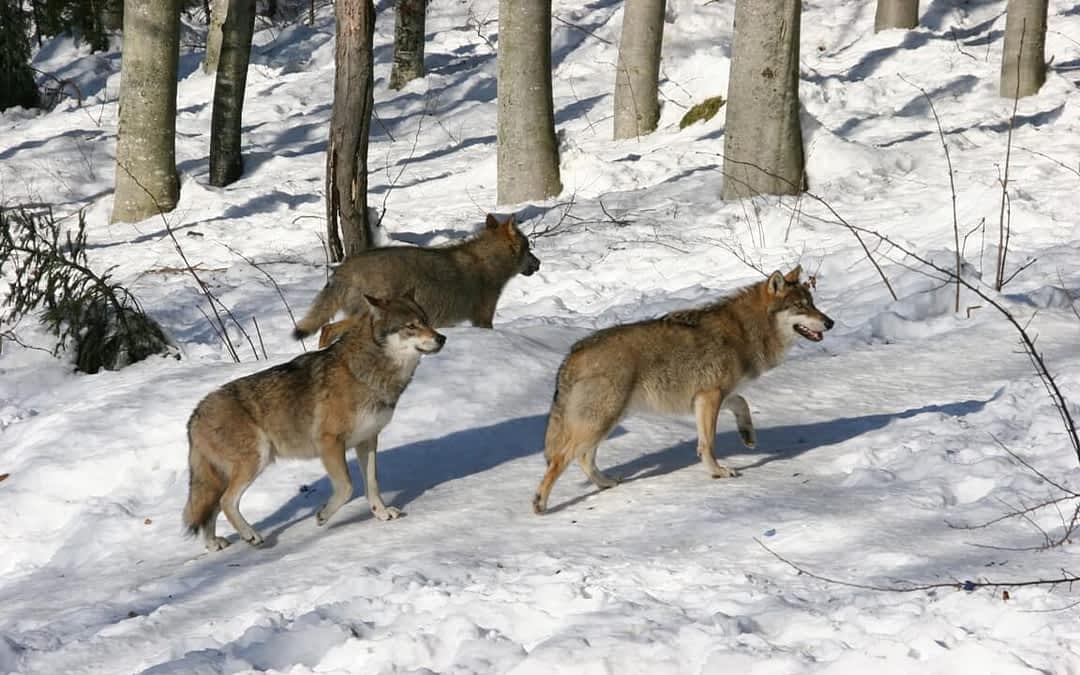 PAN Parks News – European Wildlands
