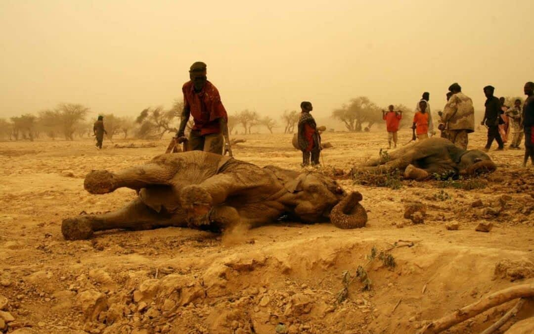 Worst Drought in 26 Years Threatens the Survival of the Last Desert Elephants in West Africa