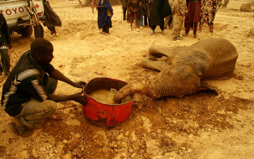 Mali Drought Continues – Rare Elephants Suffering