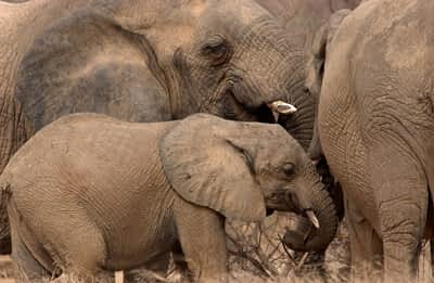 Update on Drought & the Elephants in Mali