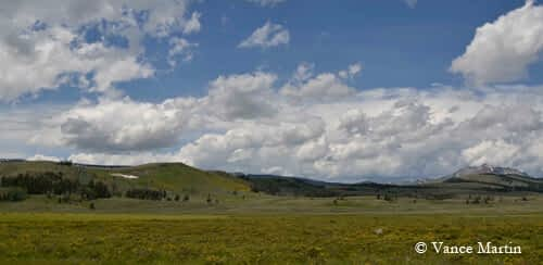 A Bison Blog—From Yellowstone to Haarlem