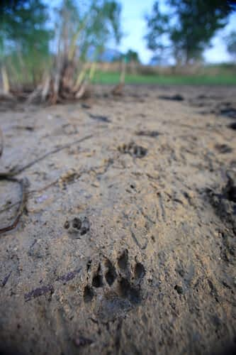Help us save the Fishing Cat!