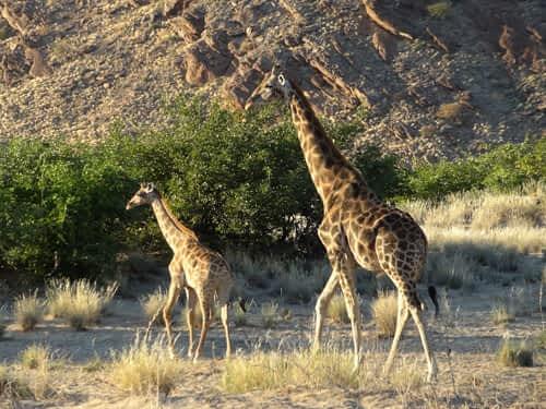 Tracks of Giants: Hiking the Horuseb Valley