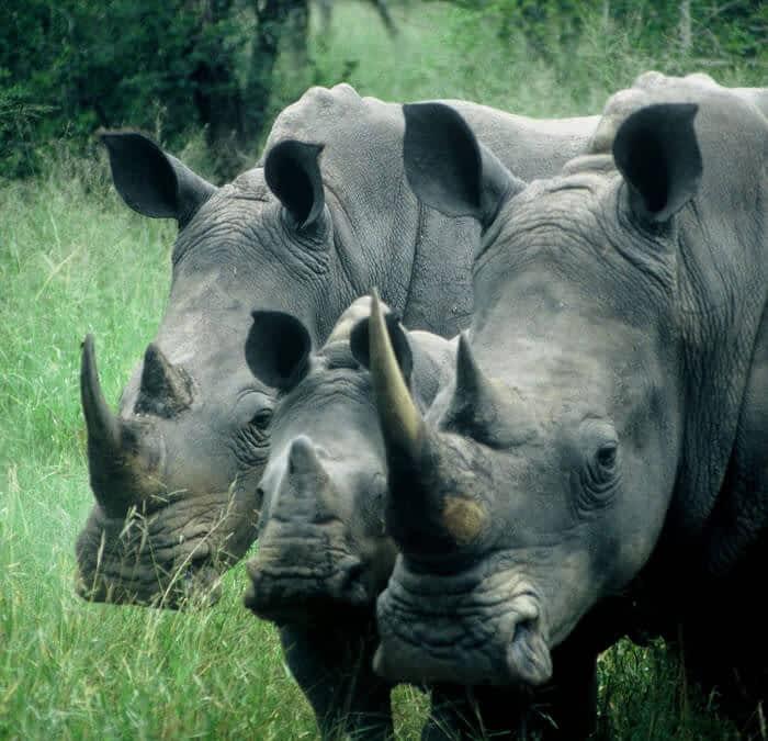Rhino Protection Update