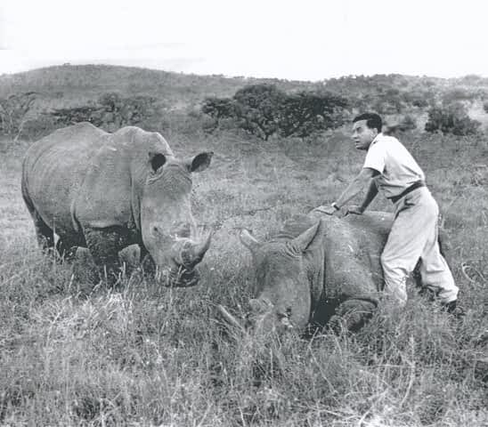Team Rhino: Conservation Groups Unite for World Rhino Day