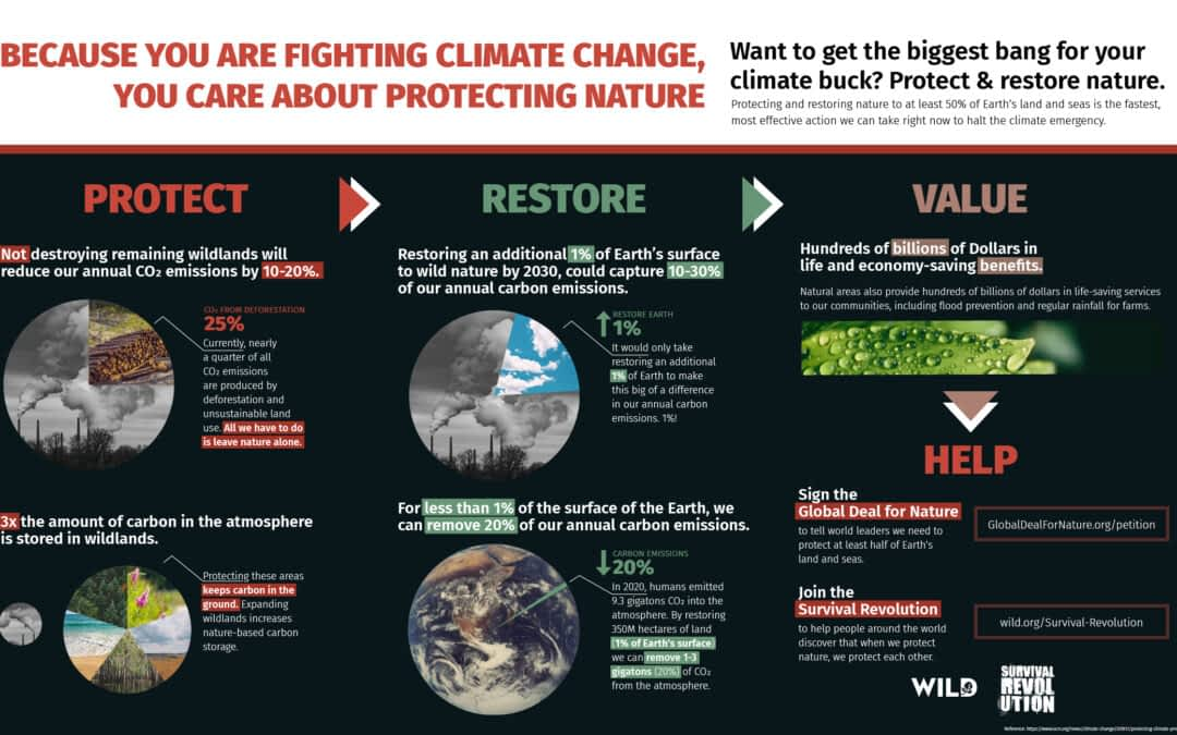 Because You are Fighting Climate Change Infographic