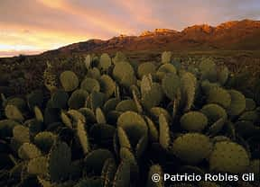 PRG-ElCarmen-cactus copy