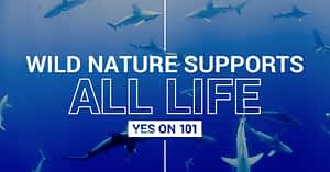 Wild nature supports all life when it has space to thrive. Protecting at least Half of Earth gives nature the space needed to produce the things people need most. I support space for nature. I support IUCN Motion 101. #IUCNCONGRESS https://wild.org/motion-101/