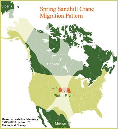 Sandhill Crane Migration Pattern