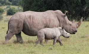 Vietnamese pop duo to help stop horror of rhino poaching