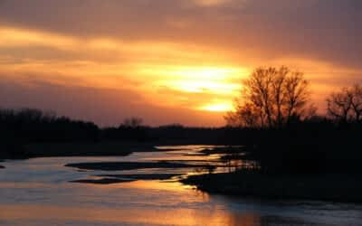 The Big Crane Migration to Small Town Nebraska