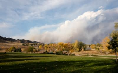 How do wildfires affect our wildlife?