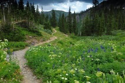Plants Wilderness