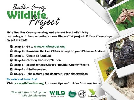 Boulder County Wildlife Project-back