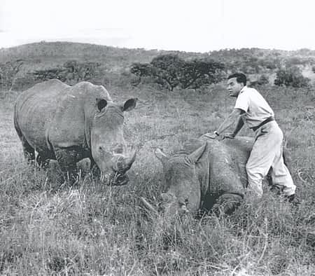 Dr. Ian Player, Operation Rhino