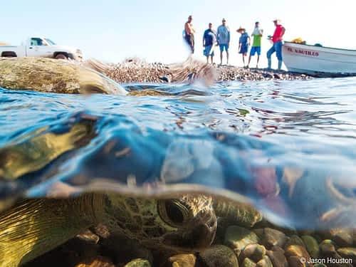 Turtle © Jason Houston
