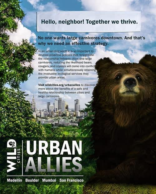 wildcitiesposter_blackbear_web
