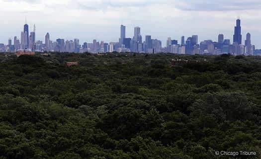 Chicago forest