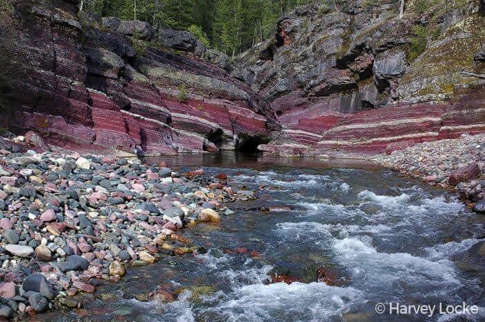 Rose's Canyon Flathead © Harvey Locke