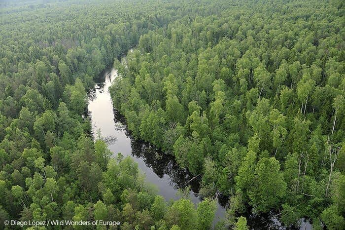 Kemeri National Park in Latvia. Healthy forest cover and waterways are essential for protected areas to supply life-supporting ecological services to all human communities, near and far.
