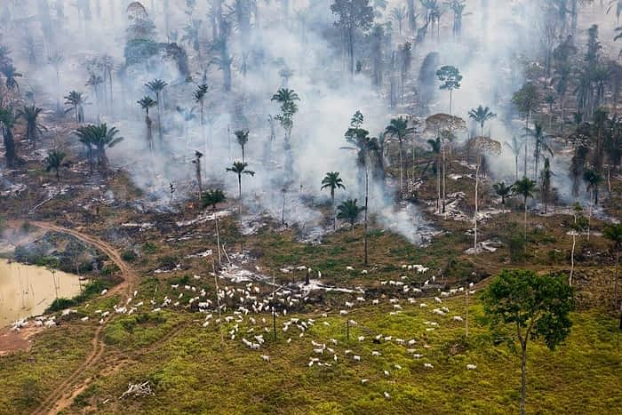 Deforestation in the Amazon rainforest © Daniel Beltra