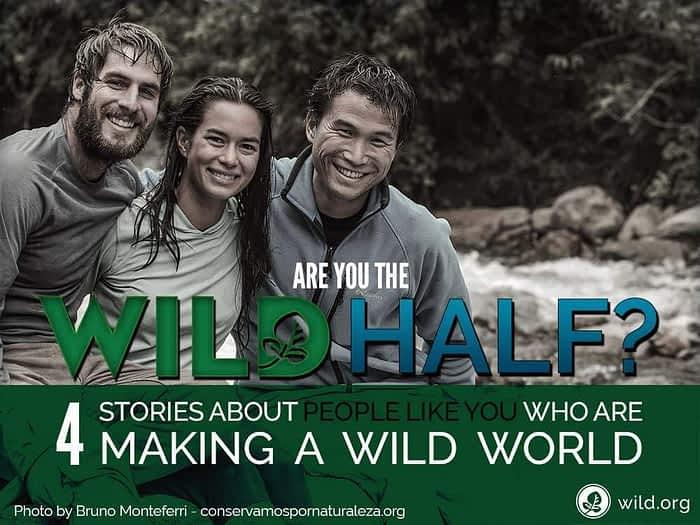 WILD Half Stories