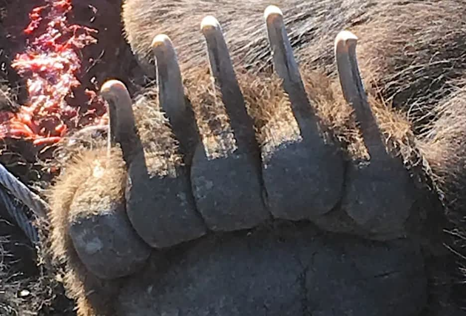 Rancher defends $339K award for stock he claims grizzlies killed - Buckrail - Jackson Hole, news