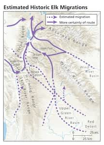 Animal migration Elk Buckrail - Jackson Hole, news
