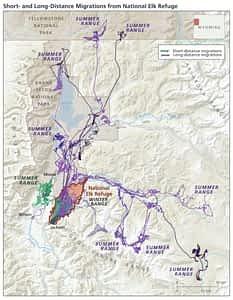 National Elk Refuge Jackson Buckrail - Jackson Hole, news