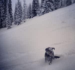 Snow Cat Buckrail - Jackson Hole, news