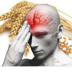 Some health experts say wheat may cut off the blood flow to the frontal cortex of the brain. Photo sxc.hu
