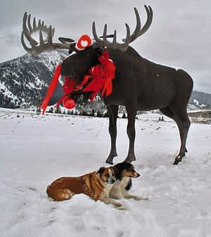 Snow dogs out a moose sculpture that signals the turn off for Bryan Flats Photo: Jake Nichols
